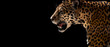 canvas print picture - cheetah, leopard, jaguar