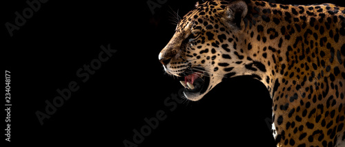 Door stickers Leopard cheetah, leopard, jaguar