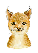 Bobcat Character Portrait. Watercolor Illustration Isolated On White Background.