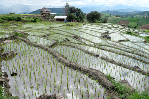 Foto op Aluminium Rijstvelden paddy rice field at the northern of Thailand