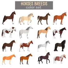 Different Horses Breeds Color Vector Icons Set. Flat Design