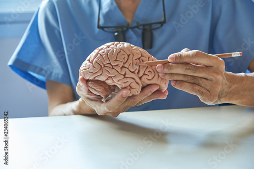 Fotografie, Obraz Doctor using pencil to demonstrate anatomy of artificial human brain model