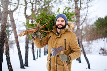 Bearded Man Carrying Freshly Cut Down Christmas Tree In Forest. Lumberjack Holds Axe And Fir Tree On His Shoulder In The Woods. Irresponsible Behavior Towards Nature, Save Forest, Keep Green Concept.