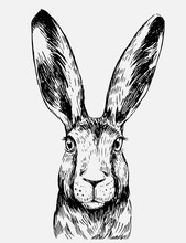 Sketch Of Hare. Hand Drawn Ill...