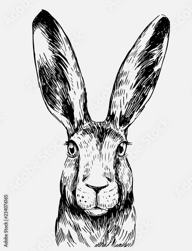 Valokuva Sketch of hare. Hand drawn illustration converted to vector