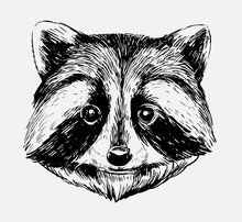 Sketch Of Racoon. Hand Drawn I...