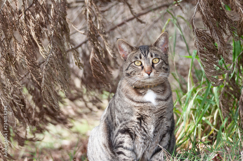 Photo  Cat outdoors -Tabby