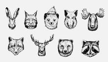 Sketch Of Forest Animals: Hare, Lynx, Marten, Boar, Moose, Wolf, Deer, Fox, Bear, Racoon