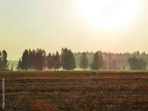Beautiful Nature Wild Landscape Sunrise with Trees and Foggy Mist