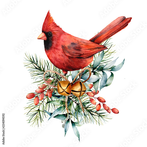 Fotomural Watercolor Christmas card with red cardinal and winter plants
