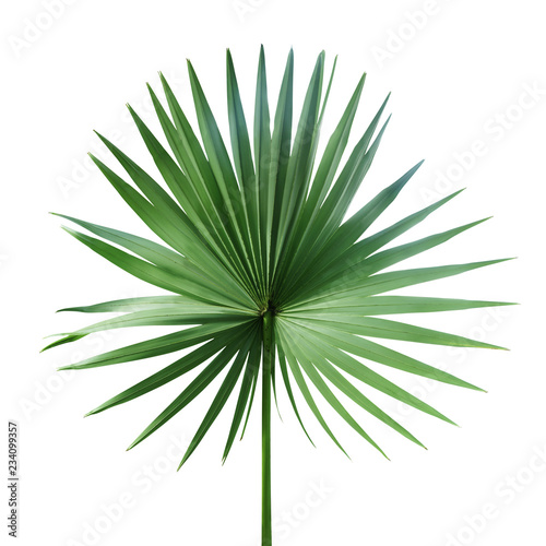 Exotic Palm Leaf Isolated on White Background Wall mural