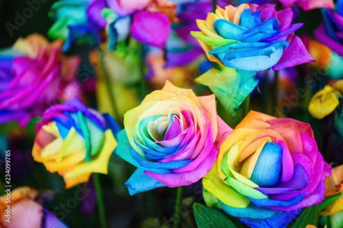 Fototapety, obrazy: rainbow rose flowers with colorful petals.