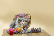 Cute Cat With Colorful Wool Ya...