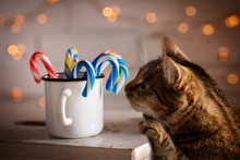 The Cat Is Smelling Candy In A Cup