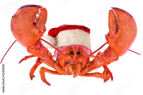 Funny lobster for Christmas, isolated on white background.