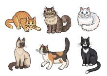 Set Of Cats - Vector Illustration