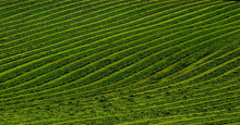 Green Pattern Of A Hay Collect...