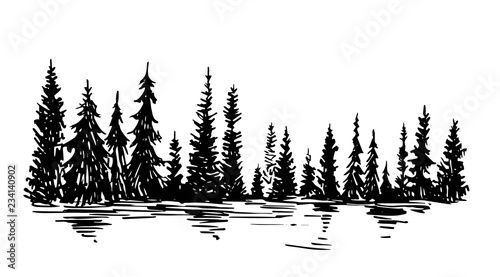 Fototapeta Hand drawn sketch of pine forest. Vector background. obraz