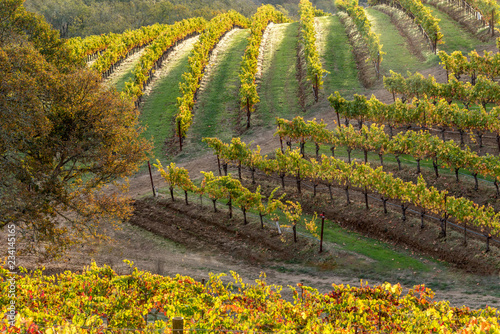 Vineyards of Napa Sonoma California in the Fall Autumn