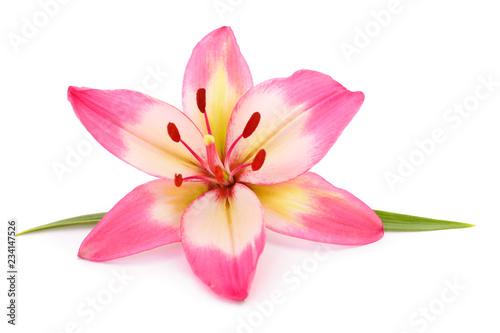 Pink lily flower. Billede på lærred