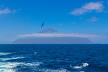 Tristan Da Cunha, The Most Remote Island, South Atlantic Ocean. Volcano Covered With Clouds And Seagull, Cormorant Or Gannet On Foreground.
