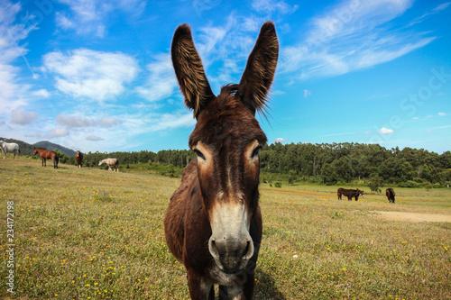 Foto op Aluminium Ezel Donkey