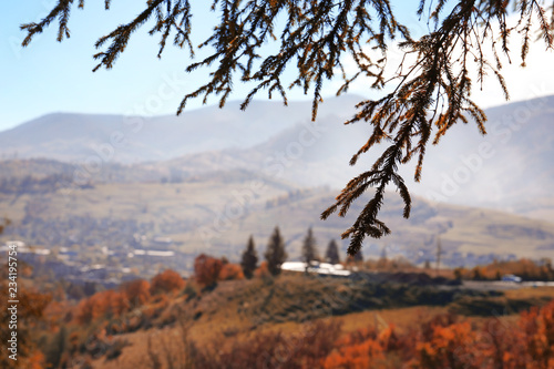 Picturesque landscape with pine tree boughs and mountains