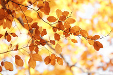 Tree Twigs With Autumn Leaves ...