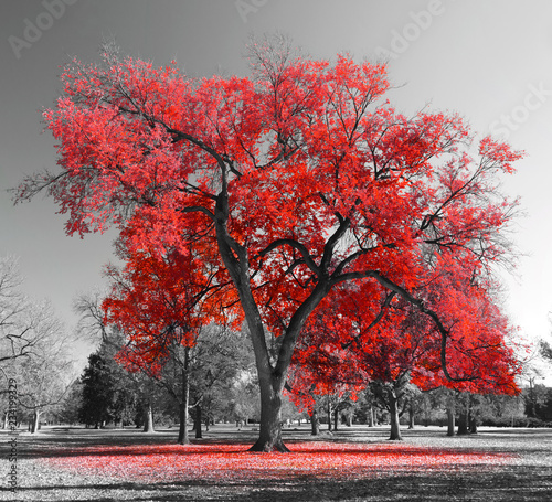 Tuinposter Grijs Big Red Tree in surreal black and white landscape scene