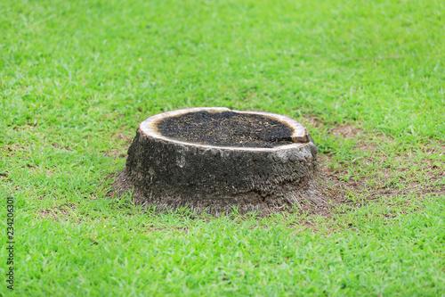 Fotografia  Coconut Stump on green grass garden in park
