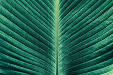 Green Palm Leaf Texture Background