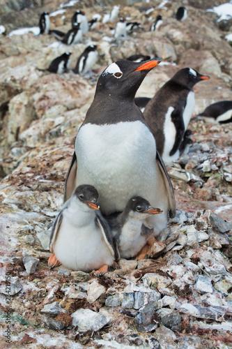 Group of gentoo penguins in Antarctica