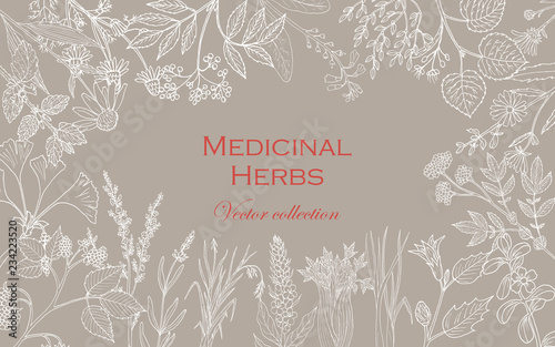 Vintage collection of hand drawn medicinal herbs and plants Wallpaper Mural