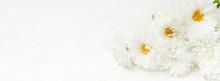 White Autumn Chrysanthemum Flo...