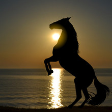 Silhouette Of Horse Rearing Up On A  Beach In The Morning Sunrise