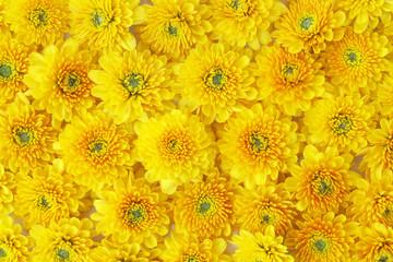 Beautiful dandelion background, yellow flowers is blooming.
