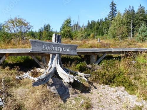 Photo  Landschaften am Lotharpfad im Nationalpark Schwarzwald