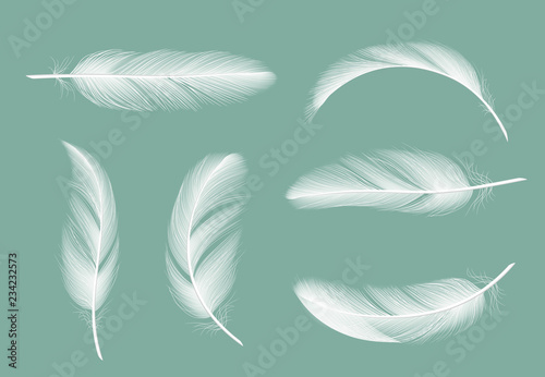 Fototapeta Feathers collection
