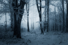Winter Evening In Snowy Woods
