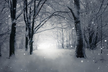 Magical Winter Forest Path