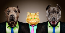 Portrait Of A Cat Guarded By Two Pit Bulls In Business Suits