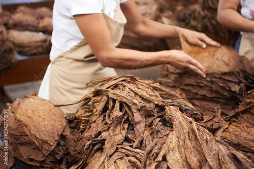 Fotografija  Honduras Cigar Factory