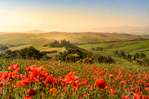 Fotoposter Toscane Poppy flower field in beautiful landscape scenery of Tuscany in Italy, Podere Belvedere in Val d Orcia Region - travel destination in Europe