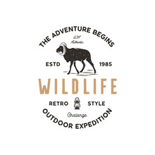 Adventure Logo Design. Camping Adventures Badge Template. Wild Goat Typogaphy Insignia Concept. Vintage Hand Drawn Silhouette Shape Of Wild Animal. Stock Isolated On White Background