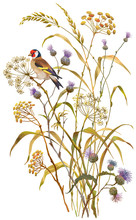 Dry Herbs, Flowers And Goldfinch Isolated On White Background.