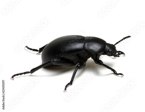 Photo black beetle on white