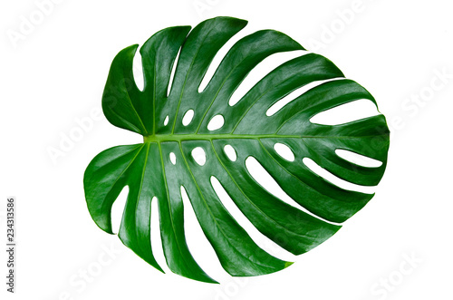 Monstera leaves leaves with Isolate on white background Leaves on white Wallpaper Mural