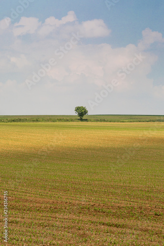 A Tree in a Field in France, Surrounded by Farmland