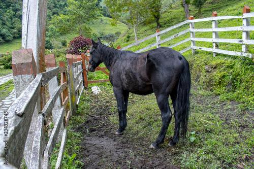 Un caballo de espaldas.