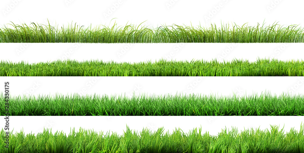 Fototapety, obrazy: grass isolated